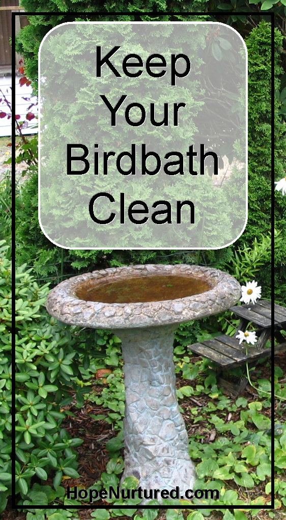 Keep Your Birdbath Clean with Pennies